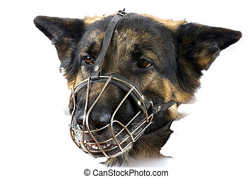 muzzle dog on white background - object on white - muzzle...