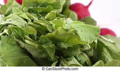 Radish with leaves - Bunch of radish with leaves