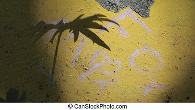 shadow from the grass on a concrete surface