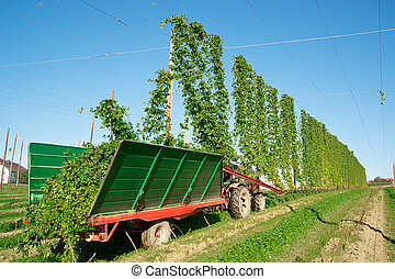 Harvester in a Hop Plantage, taken in Austria