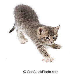 The kitten stretches against white background