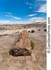 Petrified Forest National Monument - Petrified wood in the...