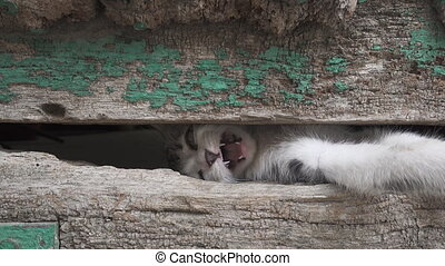 Small kitty leg through old wooden door hole - Front view...