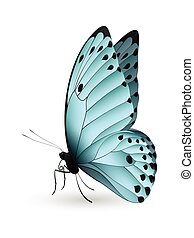 Beautiful butterfly isolated on a white background. Calypso...