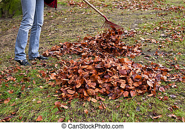 Raking leaves. Remove leaves.