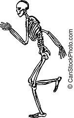 human skeleton running vector illustration sketch hand drawn...