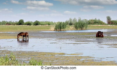 foal and horse graze on the river