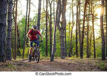 Cyclist Riding the Bike on the Trail in Beautiful Pine Forest. Adventure and Travel Concept.