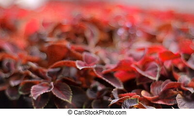charming red small leaves close-up