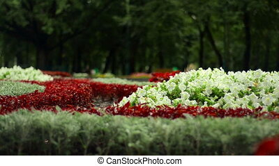 charming floral flowerbed outdoors close-up