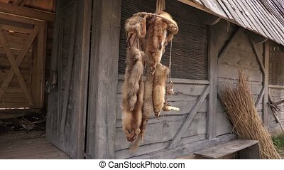Fox skins hanging near the old building