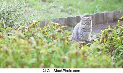 Gray cat in the grass - Among the grass and flowers sits a...