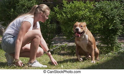 Young girl training her american staffordshire terrier dog....