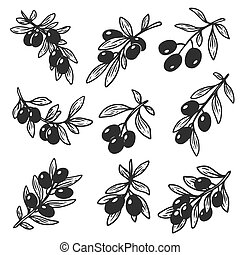 Set of isolated hand drawn sketches of olive oil - Set of...