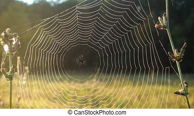 Closeup of morning dew on spiderweb moving on wind