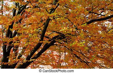 olmo, hojas, Oscuridad, ramas