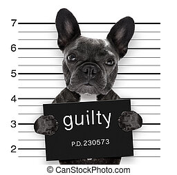 mugshot dog at police station - criminal mugshot of french...