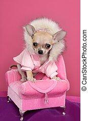 Moda, Chihuahua, perro, barbie, estilo, rosa, sillón