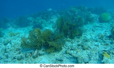coral life caribbean sea underwater 1080P video - coral life...