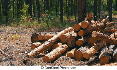 Cut Logs are Stacked in a Forest - Cut logs are stacked in a...
