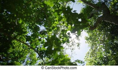 Sun light piercing through the forest canopy - Sun light...