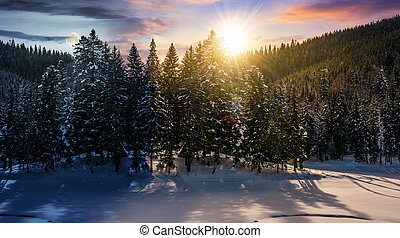 day and night concept in winter spruce forest - day and...