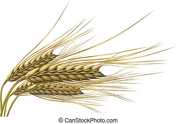 wheat grain - illustration of wheat grain on isolated...