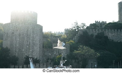 Slowmotion of seagull flying near famoust Istanbul fortress...
