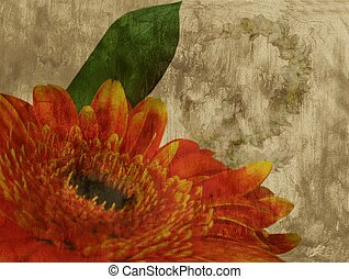 Retro background with flower orange shasta daisy, my photo,...