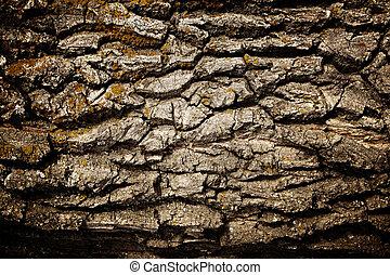 Bark of oak