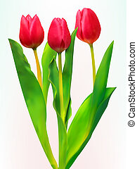 Three tulips. EPS 8