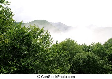 foggy mountains forest fog scenics nature