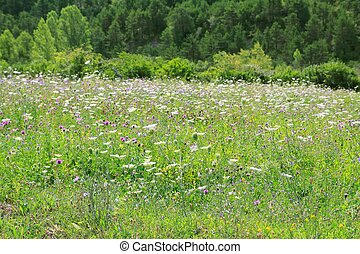 flowers meadow field outdoor spring nature - flowers meadow...