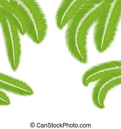 Green palm leaves silhouettes isolated on white background....