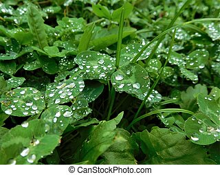 The raindrops on grass - Water is magic thing. When rain and...