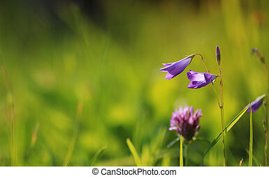 colorful flower sunset in the field - various objects of the...