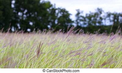Beautiful grassland at autumn