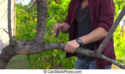 In slow motion, a farmer cuts an old branch from a fruit...