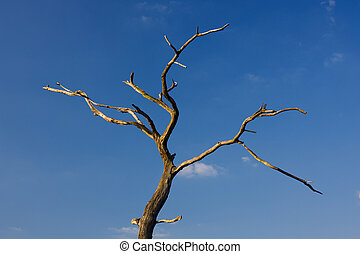 Dead Tree - A dead tree against blue sky.