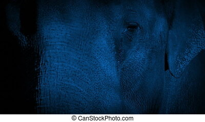 Elephant Face At Night - Closeup of elephant face in the...