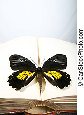 wisdom colors - butterfly on an opend old book