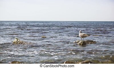 The seagull stands on a rock in the waves of water slow mo -...