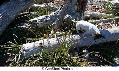 Group purebred  jack russel terrier dogs hunting sunny day
