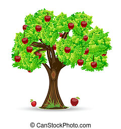 apple tree - illustration of apple tree on white background