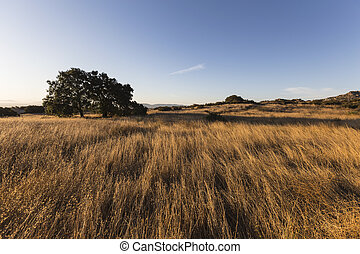 Los Angeles Nature Park Morning Meadow