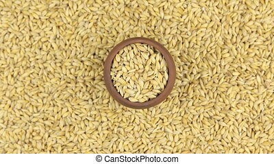 Rotation and approaching of barley in a clay pot, standing...