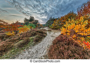 Colorful Autumn heathland landscape with colorful leaves on...