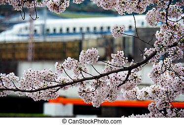Japanese bullet train with cherry blossoms. - Shinkansen or...
