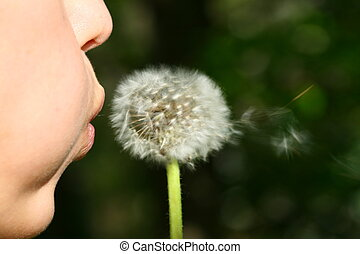 i wish - girl face blow on white dandelion