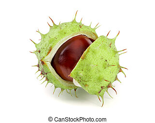 chestnut in the skin isolated on white background closeup.
